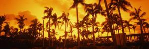 Palm Trees on the Beach, the Setai Hotel, South Beach, Miami Beach, Florida, USA