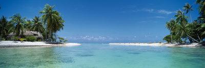 https://imgc.allpostersimages.com/img/posters/palm-trees-on-the-beach-tikehau-french-polynesia_u-L-P31X0X0.jpg?p=0