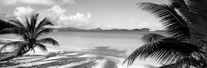 Palm Trees on the Beach, Us Virgin Islands, USA