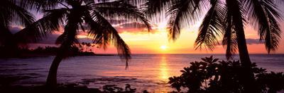 Palm Trees on the Coast, Kohala Coast, Big Island, Hawaii, USA