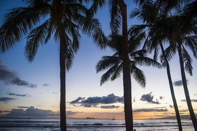 https://imgc.allpostersimages.com/img/posters/palm-trees-on-waikiki-beach-oahu-hawaii-united-states-of-america-pacific_u-L-PQ8PKN0.jpg?p=0