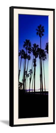 Palm Trees Silhouette at Sunrise, Santa Barbara, California, USA