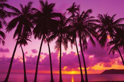 Palm Trees Silhouette Thailand
