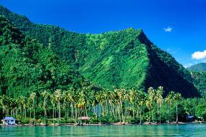 Palm Trees with Mountain Range in the Background, Tahiti, French Polynesia