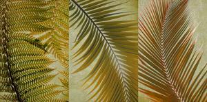 Palm Trio I