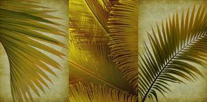 Palm Trio II