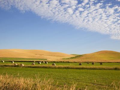 https://imgc.allpostersimages.com/img/posters/palouse-farmland-whitman-county-washington-usa_u-L-PHAMAT0.jpg?p=0