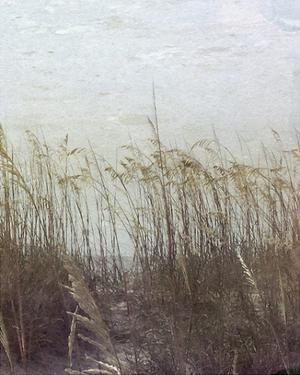 Through the Dunes II by Pam Ilosky