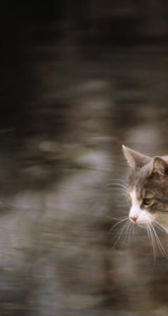 Cat on Rock by Pam Ostrow