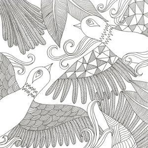 Love Birds by Pam Varacek