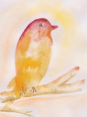 Western Tanager by Pam Varacek
