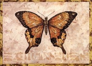 Butterfly VI by Pamela Gladding