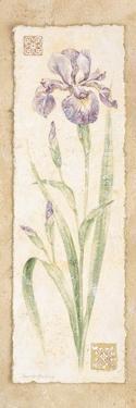 Iris by Pamela Gladding