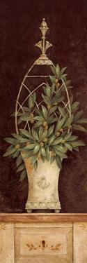 Olive Topiary II by Pamela Gladding