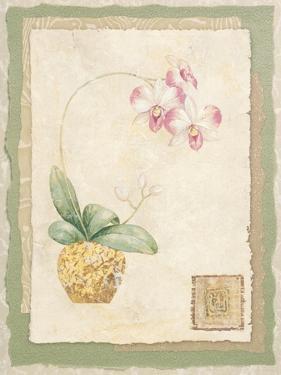 Orchid I by Pamela Gladding