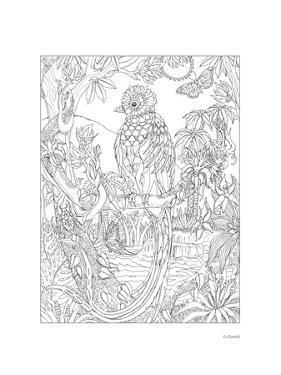 Quetzal by Pamela J. Smart
