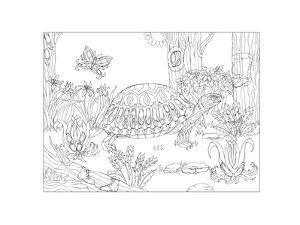 Turtle - Slowly But Shoely by Pamela J. Smart