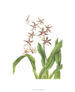 Orchid Study III by Pamela Shirley