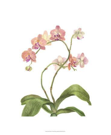 Orchid Study IV