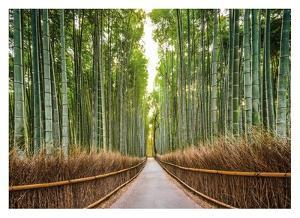 Bamboo Forest, Kyoto, Japan by Pangea Images