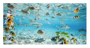 Fish and sharks in Bora Bora lagoon by Pangea Images