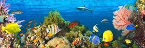 Life in the Coral Reef, Maldives by Pangea Images