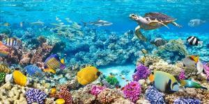 Sea Turtle and fish, Maldivian Coral Reef by Pangea Images