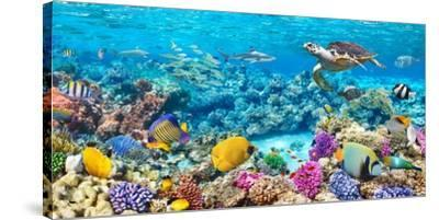 Sea Turtle and fish, Maldivian Coral Reef