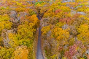 Aerial view of colorful trees in forest, Stephen A. Forbes State Park, Marion Co., Illinois, USA by Panoramic Images