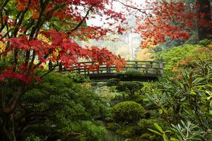 Autumn leaves on trees and footbridge, Japanese garden, Portland, Oregon, USA by Panoramic Images