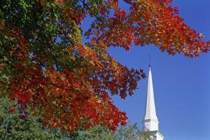 Autumn tree branch and church steeple, Vermont, USA by Panoramic Images