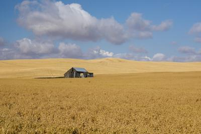 Barn in a field, Moscow, Idaho, USA by Panoramic Images