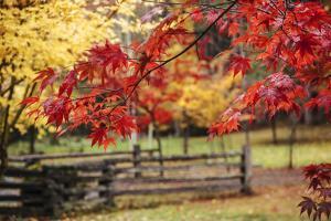 Close-up of maple leaves, Bainbridge Island, Kitsap County, Washington State, USA by Panoramic Images