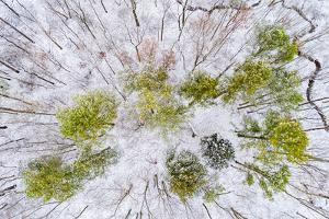 Close-up of maple leaves, Bainbridge Island, Kitsap County, Washington State, USA by Panoramic Images