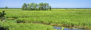 Field, Jean Lafitte National Park, New Orleans, Louisiana, USA by Panoramic Images