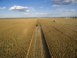 High angle view of combine harvesting corn crop, Marion County, Illinois, USA by Panoramic Images