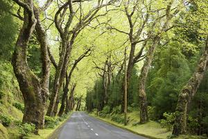 Highway EN1-1A Passing through green forest, Nordeste, Sao Miguel, Azores, Portugal by Panoramic Images
