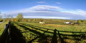 Horses grazing on paddock at horse farm, Lexington, Kentucky, USA by Panoramic Images