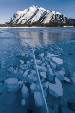 Methane bubbles frozen in ice below Mt. Michener, Abraham Lake, Alberta, Canada by Panoramic Images