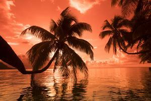 Palm trees at sunset, Moorea, Tahiti, French Polynesia by Panoramic Images