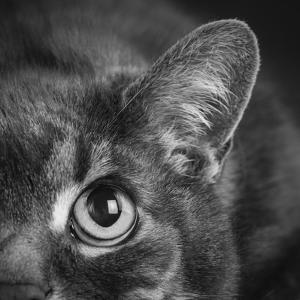Portrait of a Cat by Panoramic Images