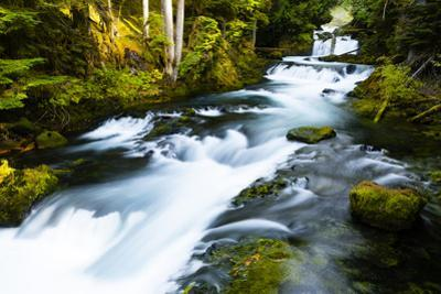 River amidst forest, Portland, Oregon, USA by Panoramic Images