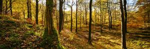 Scenic autumn forest, Grasmere, Lake District, Cumbria, England, United Kingdom by Panoramic Images