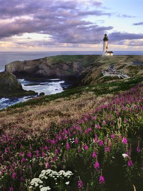 Silhouette of Yaquina Head Lighthouse, Yaquina Head, Lincoln County, Oregon, USA by Panoramic Images