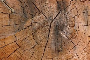 Tree Stump Detail by Panoramic Images