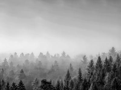 Trees covered with fog in Autumn, Baden Wurttemberg, Germany by Panoramic Images
