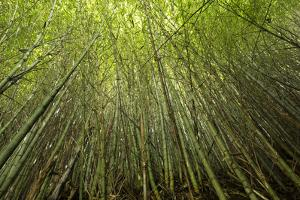 View of Cypress trees, Horseshoe Lake State Fish Wildlife Area, Alexander Co., Illinois, USA by Panoramic Images