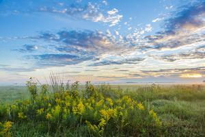 View of prairie, Prairie Ridge State Natural Area, Marion Co., Illinois, USA by Panoramic Images