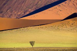View of tree on desert and dunes , Sossusvlei, Namib-Naukluft National Park, Namibia by Panoramic Images