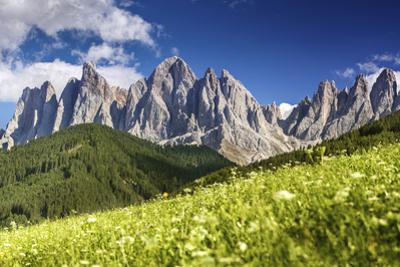 Panoramic View of Dolomite Alps and Forest, Northern Italy